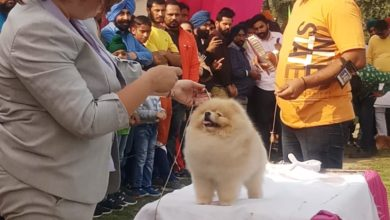 Dog show on the second day of Patiala heritage festival saw huge rush