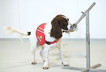 COVID-19 detection dogs trial launches in UK; COVID dogs may be able to detect coronavirus in humans